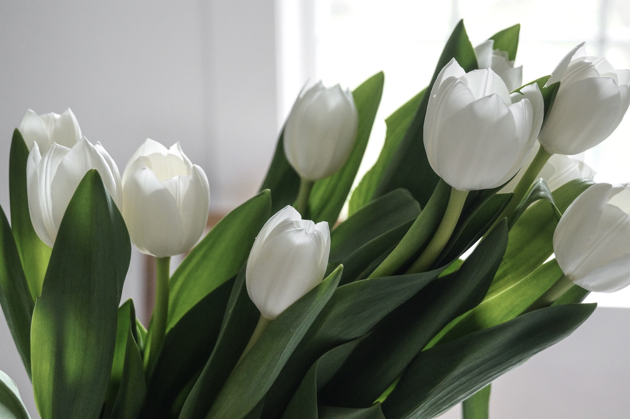 White Tulip Arrangement For Spring
